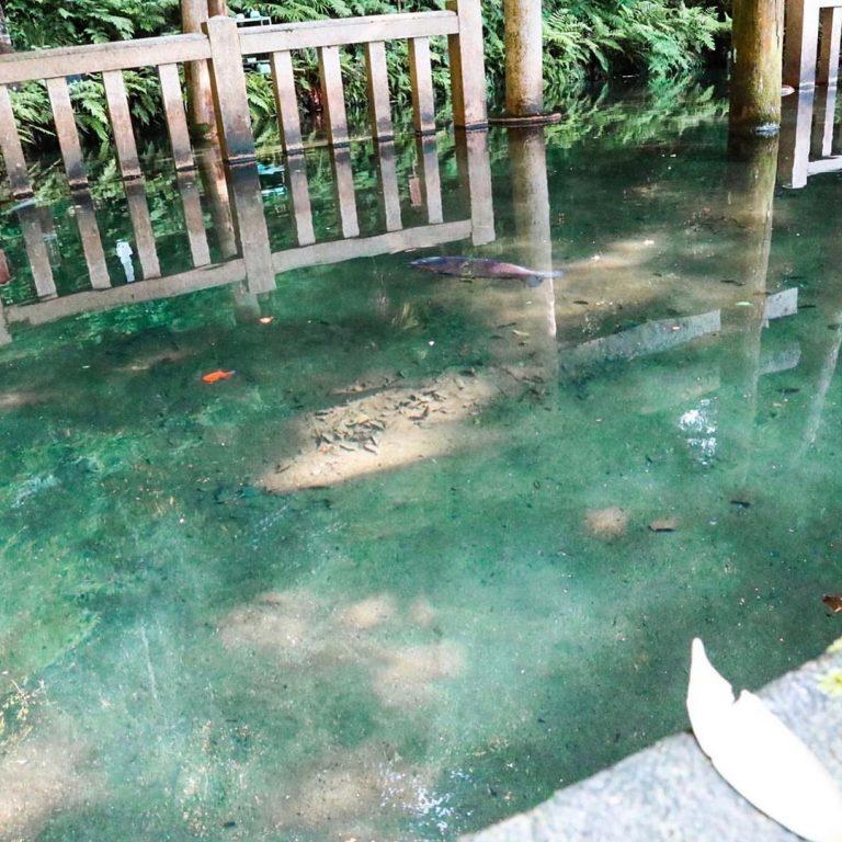 鹿島神宮 御手洗池